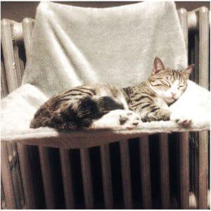 cat hammock for your cat