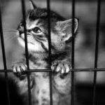 cute kitten in animal shelter