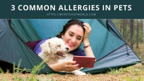 3 common Allergies in pets