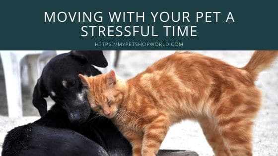 Moving with Pets a stressful time