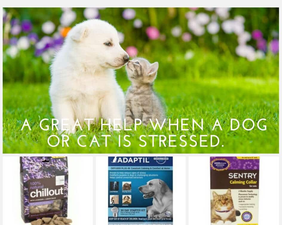 Moving with your pet calming products