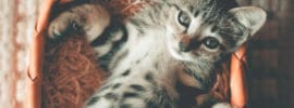 Cat scratches Designer sofa