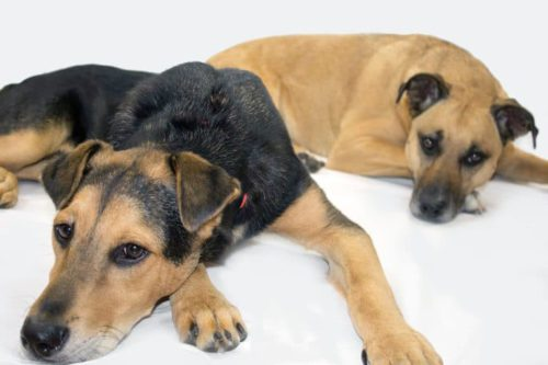 Adopt Dogs from the Animal Shelter