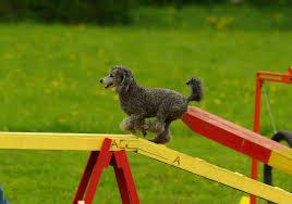 Tips for Dog training