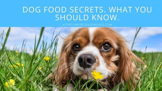 dog food Secrets