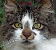 Our Cat Leo