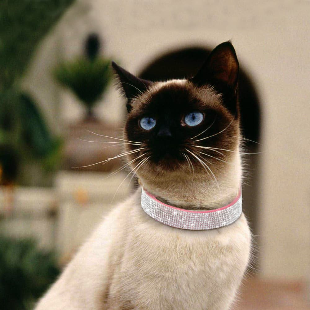 Rhinestone collar for cats