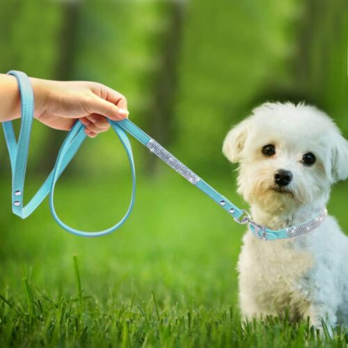 Rhinestone collar with dog leash
