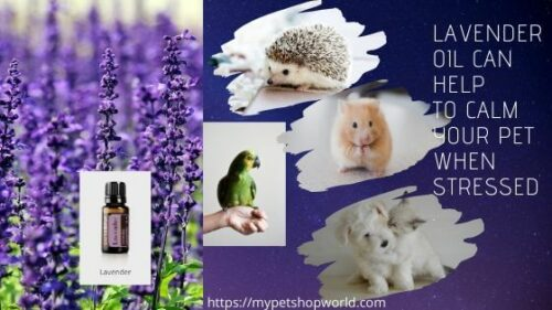 Essential oils for cats and dogs. Be cautious