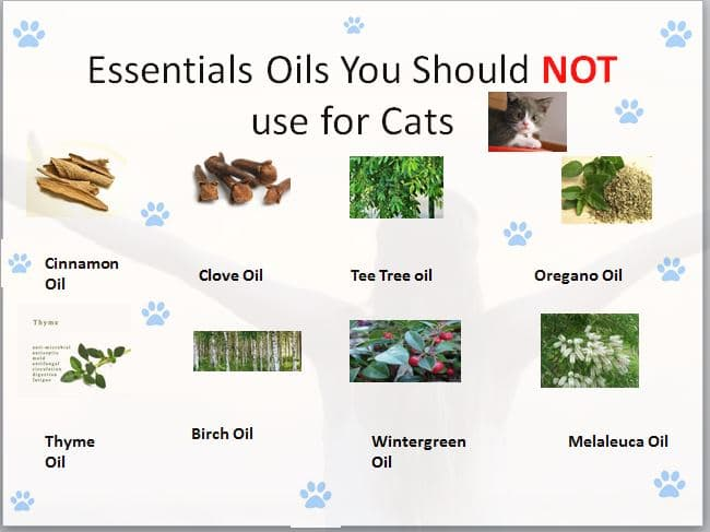 essential oil for cats