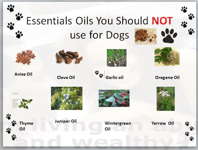Essential oils no to use for dogs