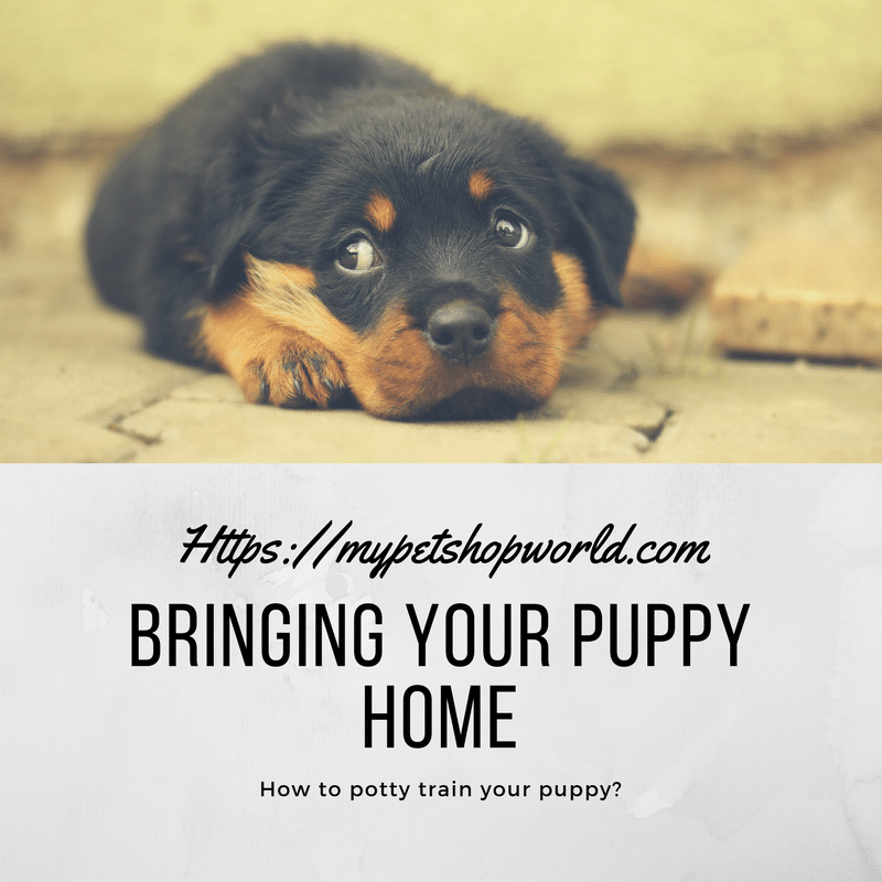 Bring your Puppy home