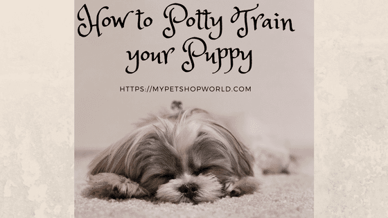 Potty train your pup