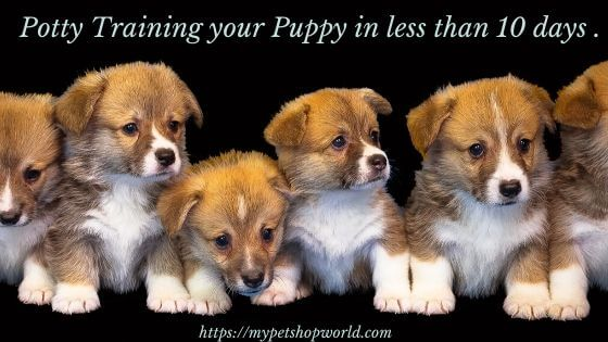 Potty training for your Puppy