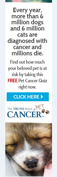 Truth about cancer in pets