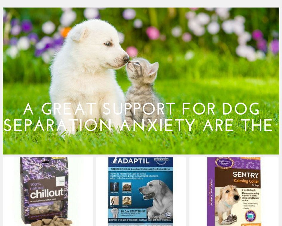 dog separation anxiety products