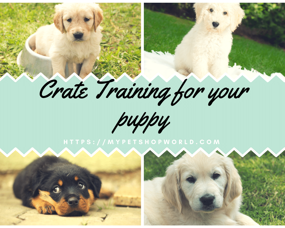 Crate Training for your puppy