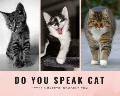 Do you speak cat