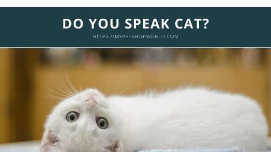 Do you speak cat