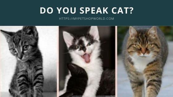speaking the cat language