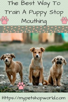 The best way to train your puppy stop mouthing