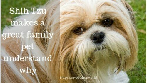 The Shih Tzu a geat family pet