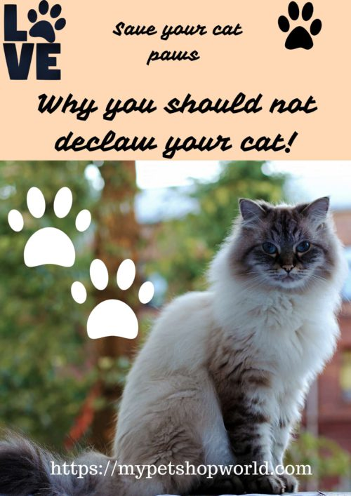 Why you should not declaw your cat