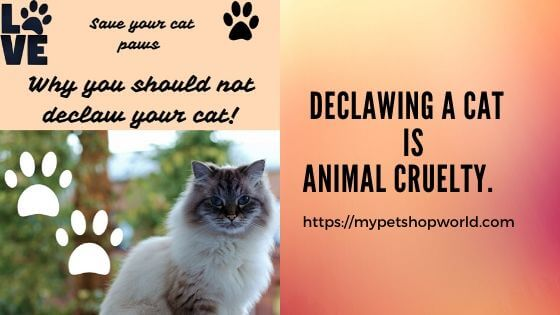 declawing your cat is animal cruelty.