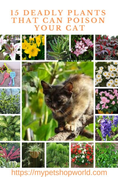 deadly plants for your cat be aware