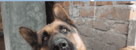Dog nipping and biting a serious concern when your dog is an adult dog