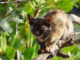 cat with a mangrove tree