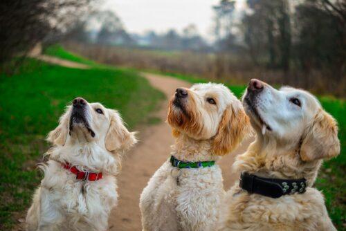 Dog Training for your dog