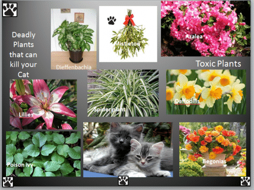 Deadly Plants That Are Poison For Cats Best Pet Supplies