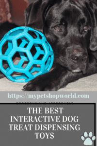The best interactive toys for your dog