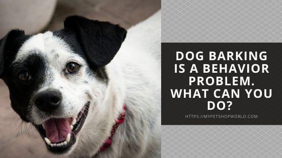 dog never stops barking