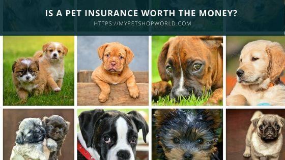 Pet insurance is it worth it