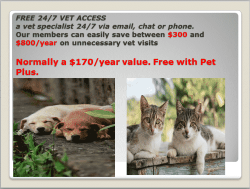 Protect your pet and you from high expensive vet bills