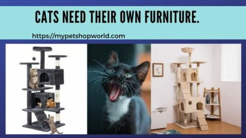 cat trees and cat houses
