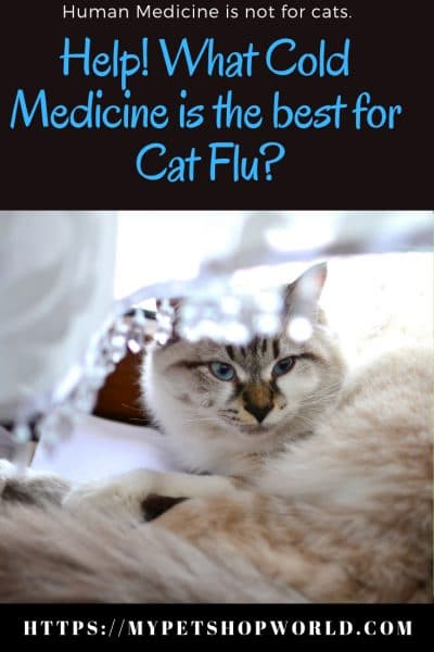 flu symptoms in cats