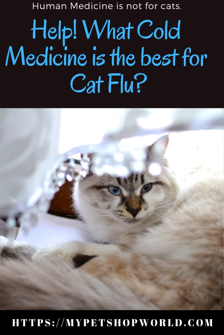flu symptoms in cats