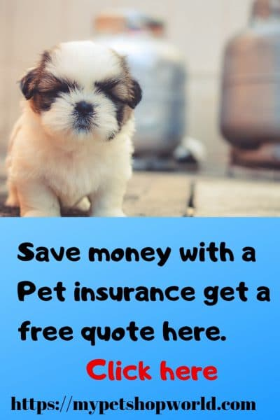free quote pet insurance a great deal