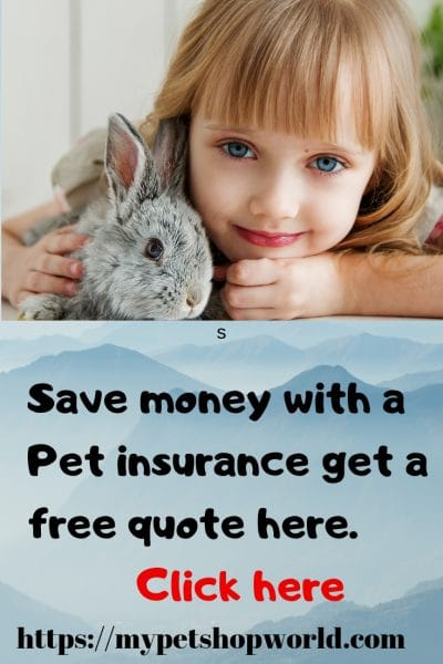 you can get a insurance for any pet