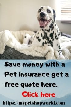 using a pet insurance a great idea to reduce vet bills