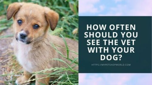 How often should you see the vet with your dog