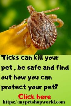 ticks can kill your dog