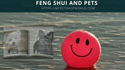 Feng Shui and Pets promote wealth