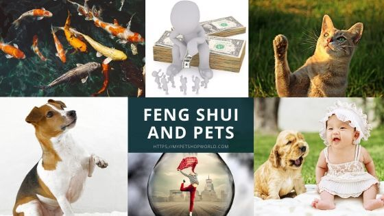 Feng Shui for Pets