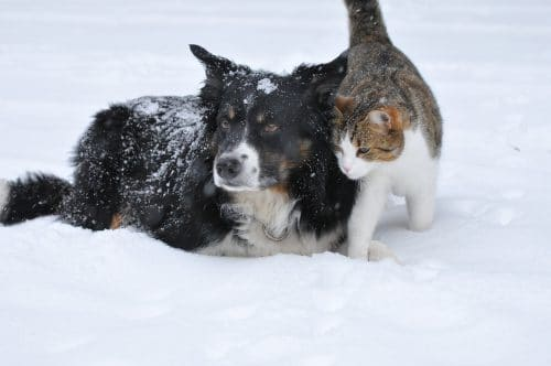 a cold time for cats and dogs