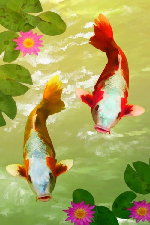 Fish are a symbol of abundance in Feng Shui