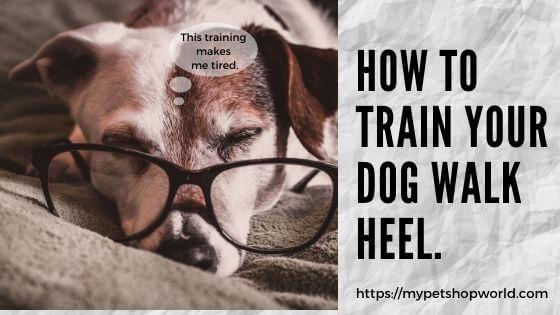 Train your dog to walk heel